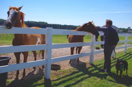 Husband with Horses